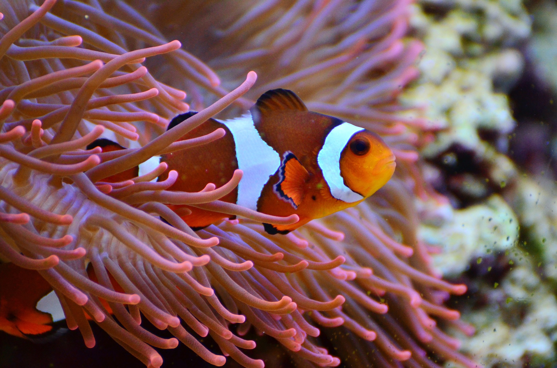 TerrOcean, loisir à l'Ile Maurice, plongée